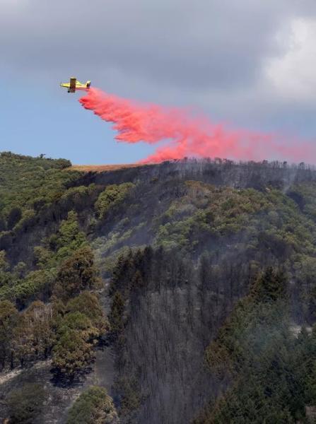 新西兰南岛山火持续