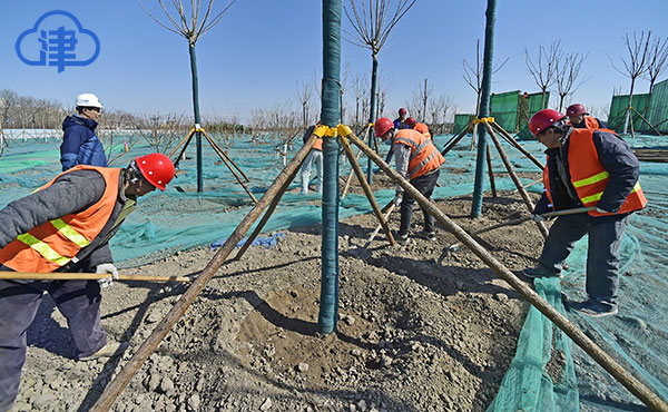 """天津港保税区""""城市绿廊""""一期绿化工程预计11月完工"""